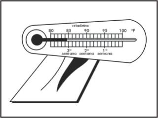 Termômetros criadeira